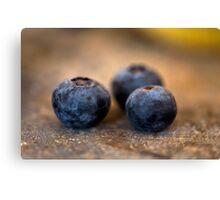 Blueberry Trio Canvas Print
