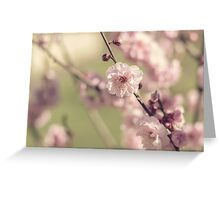 Apple Blossoms in Spring Greeting Card