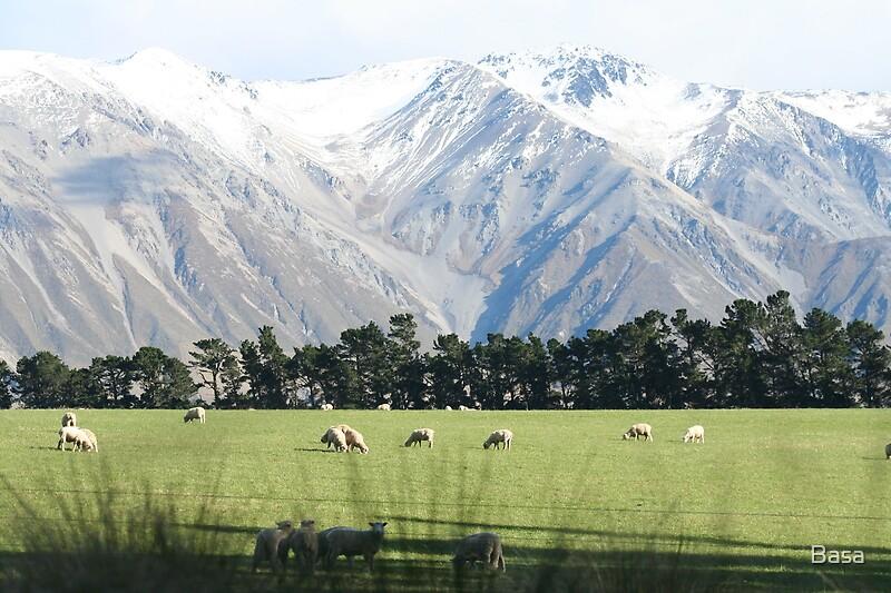 NZ Landscape. by Basa