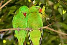 Scaly-breasted Lorikeets by Carole-Anne