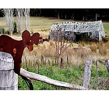 photoj Tasmania Countryside Photographic Print