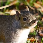 Cute Squirrel saying hello by RichImage