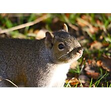 Cute Squirrel saying hello Photographic Print