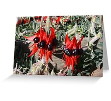 Sturt Desert Pea. Greeting Card