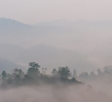 Mist over Nam Kan forest by Thomas Calame
