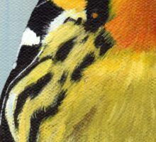 Blackburnian Warbler  Sticker