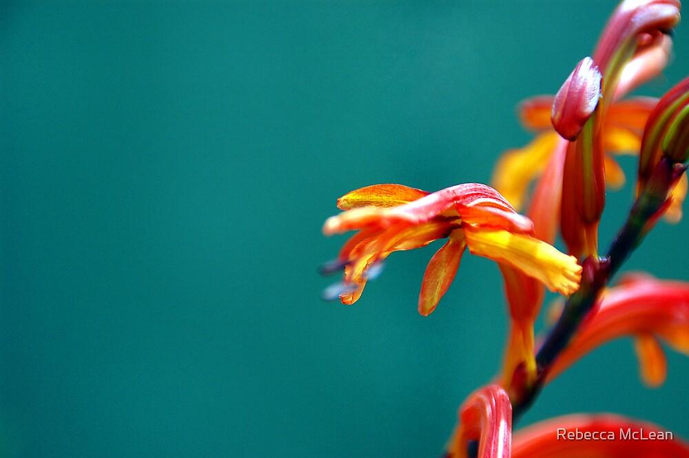 Orange and Teal by Rebecca McLean