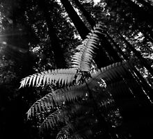 A fern in a redwood forest by Ashley Ng