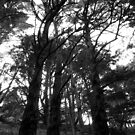 Three trees by Ashley Ng