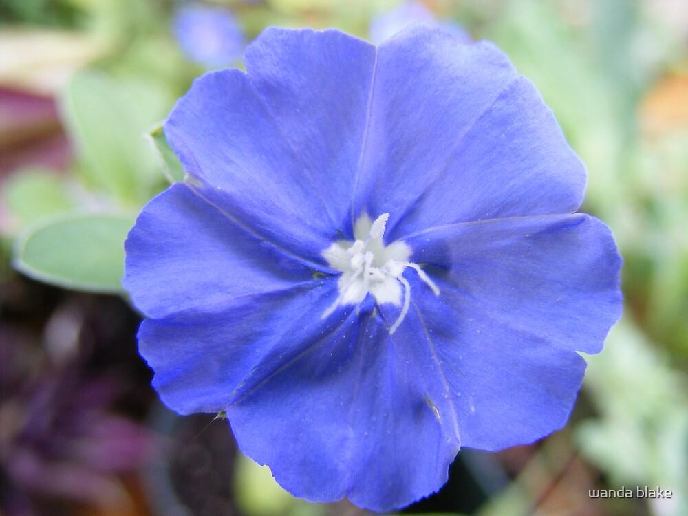 blue daze by wanda blake