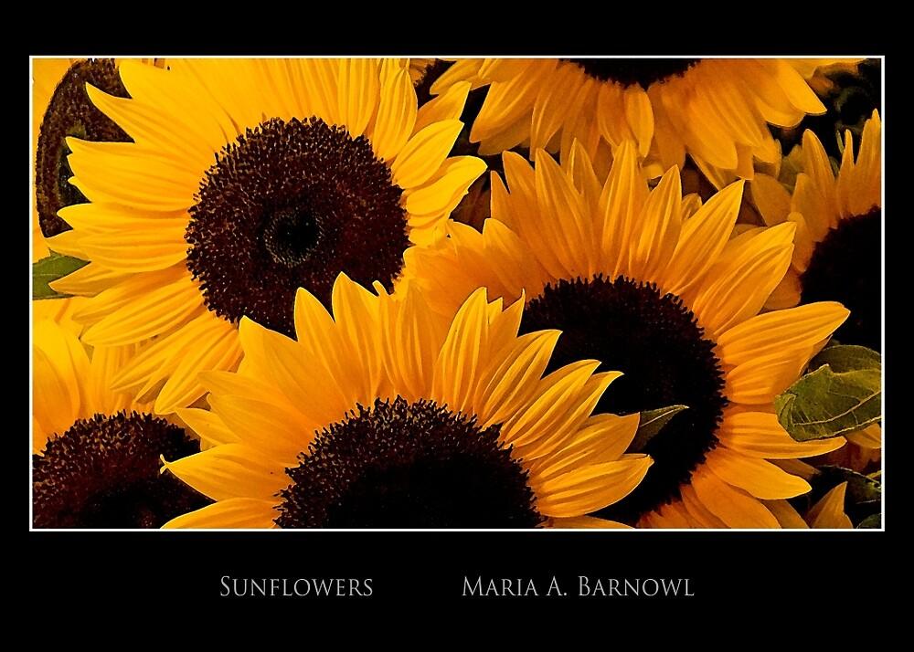 Sunflowers II - Cool Stuff by Maria A. Barnowl