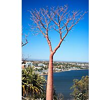 Boab Tree Photographic Print