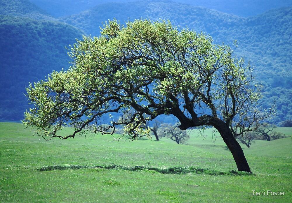 Sculpted Oak Tree by Terri Foster
