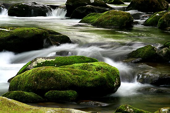 Mossy River Rocks by Gary L   Suddath
