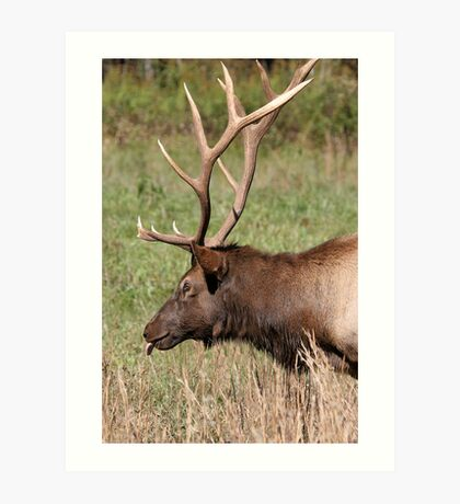 Elegant Elk Art Print