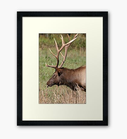 Elegant Elk Framed Print