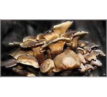 Crowded Fungi on an Old Oak Photographic Print