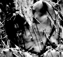 Love Hurts by Cinthia Creel