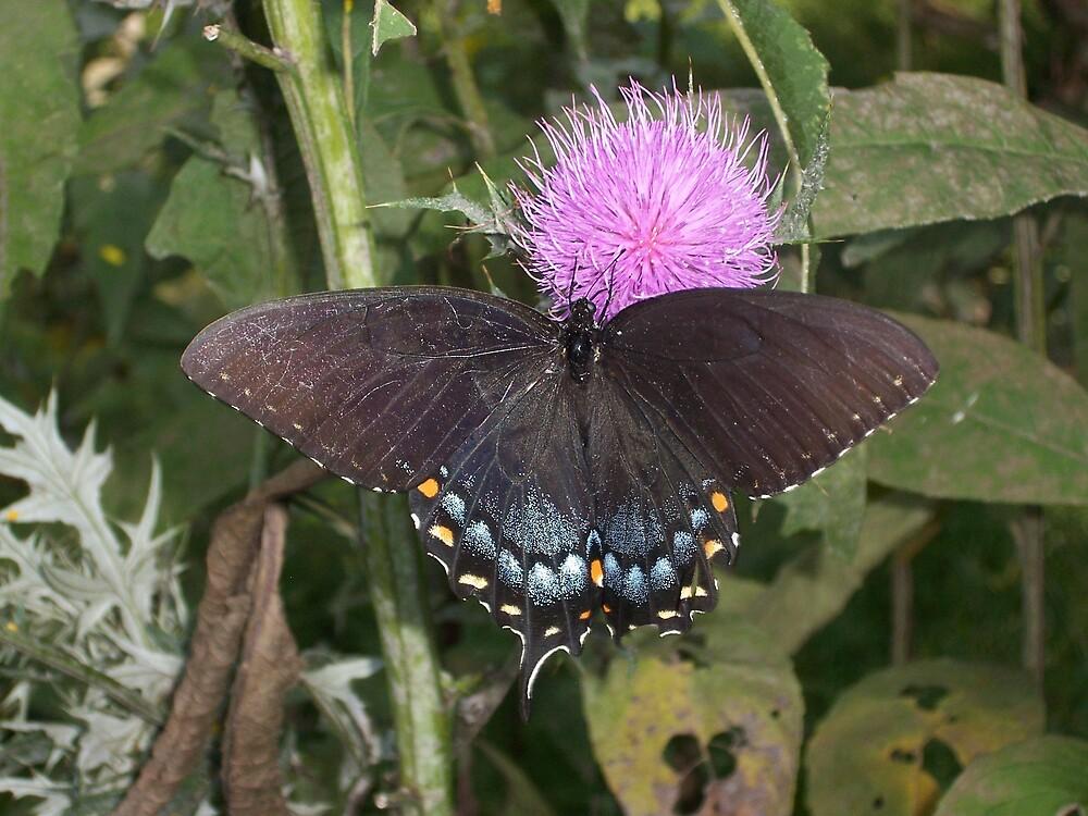 Butterfly by Elf2004