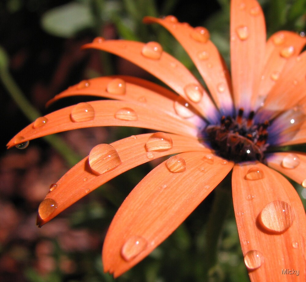 Drops of Orange by Micky