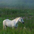 Equus Caballus 2015 by Petri Volanen