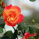Oregon Rose by Maria A. Barnowl