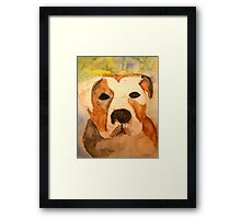 Pit Bull Watercolor Framed Print