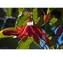 Mary Jane Passiflora Photographic Print