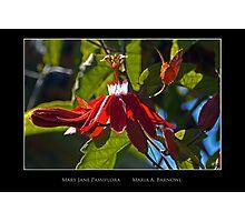 Mary Jane Passiflora - Cool Stuff Photographic Print