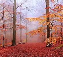 Beech Forest. November. by Irina Chuckowree