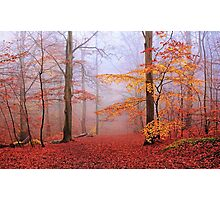 Beech Forest. November. Photographic Print