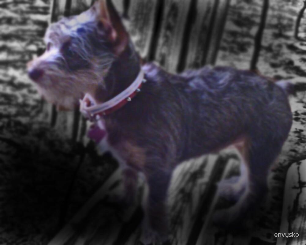 puppy by envysko