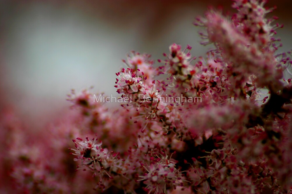 Pink by Michael  Bermingham