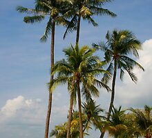 A palm lined beach in the tropics by jwwallace