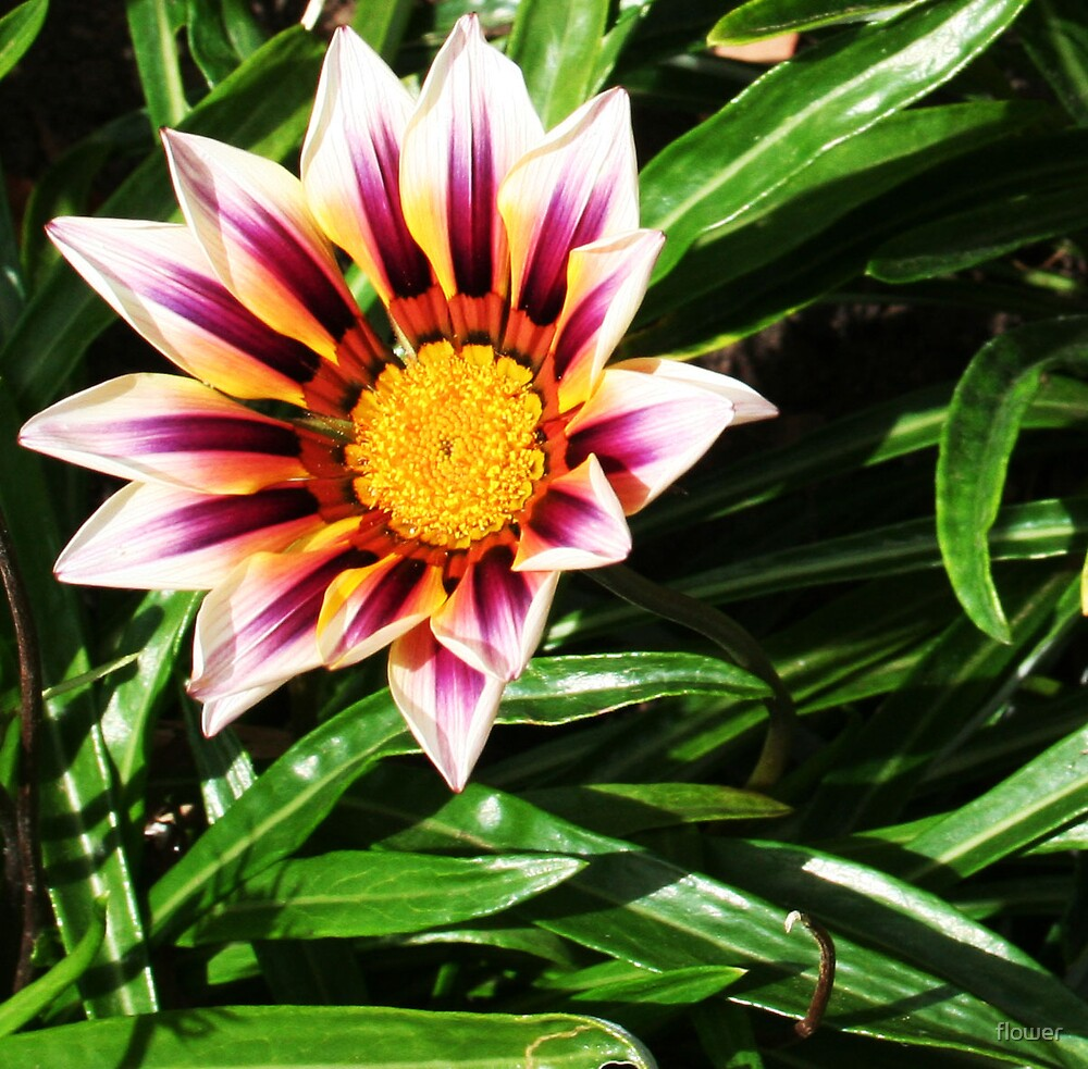 flower star by flower