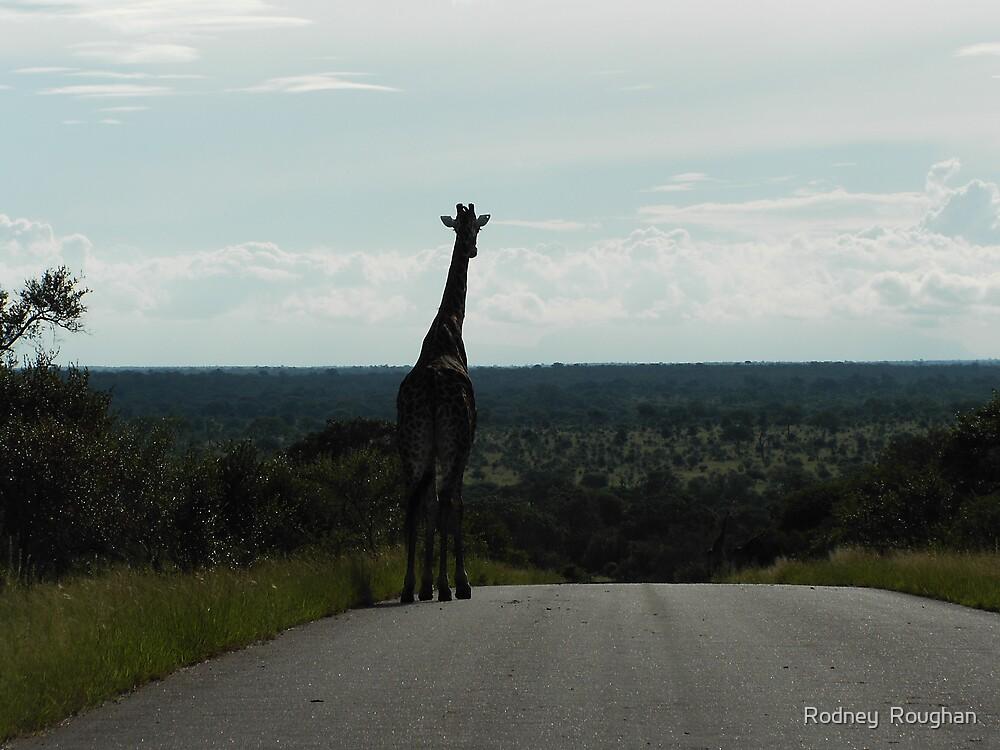 kruger national park sth africa by Rodney  Roughan