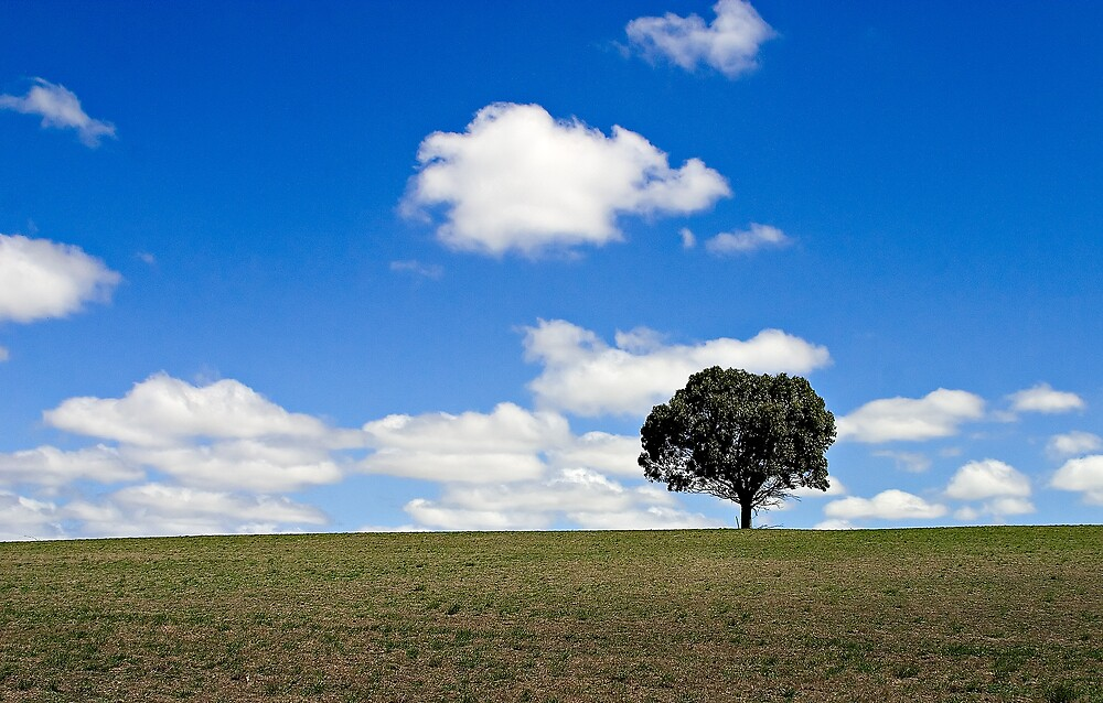 A Tree in a Field by RobYoung