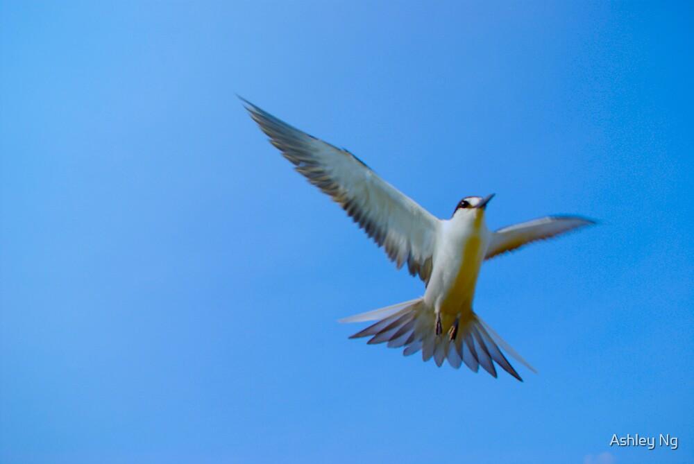 Fly away by Ashley Ng