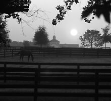 Black and White Early Morning Picture of Horse by Janice Makofski