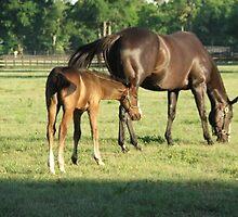 Mom & Foal by Janice Makofski