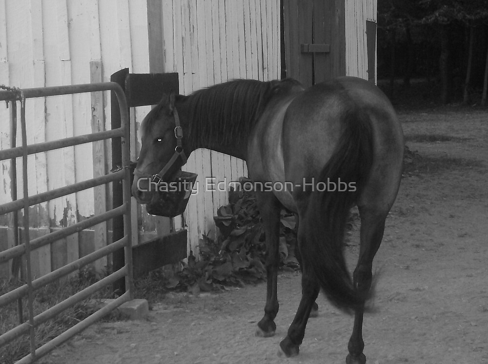 Horse in black and white by Chasity Edmonson-Hobbs