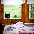 """""""Wondering what's SHE doing IN there... Better investigate"""" by Silvia Ganora"""
