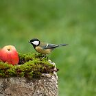 Great tit and a red apple by Susanna Hietanen