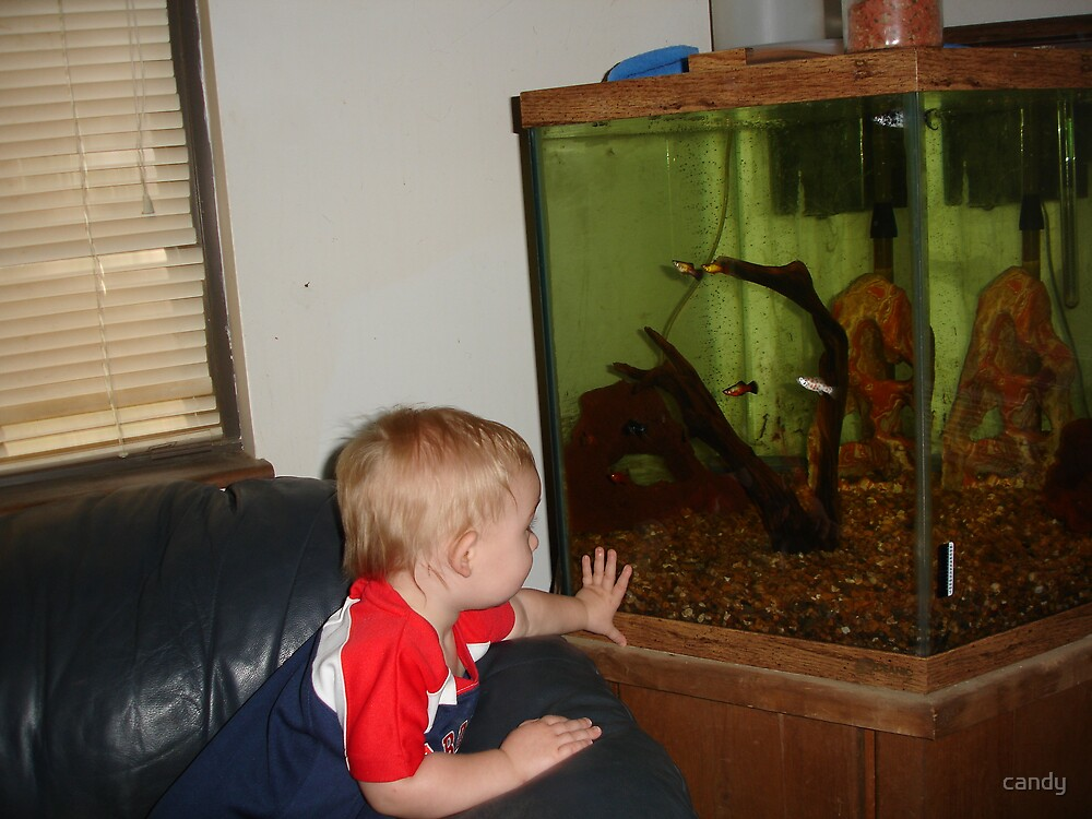 Kam looking at MaMa's fish by candy