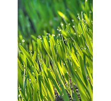 Morning Grass 4 Photographic Print