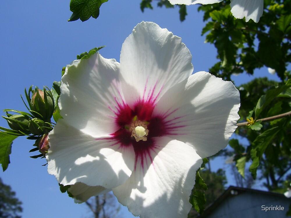 Blooming for Blue Skies by Sprinkle