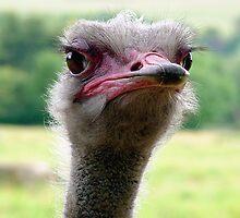 Grumpy Bird! by Andy Coleman