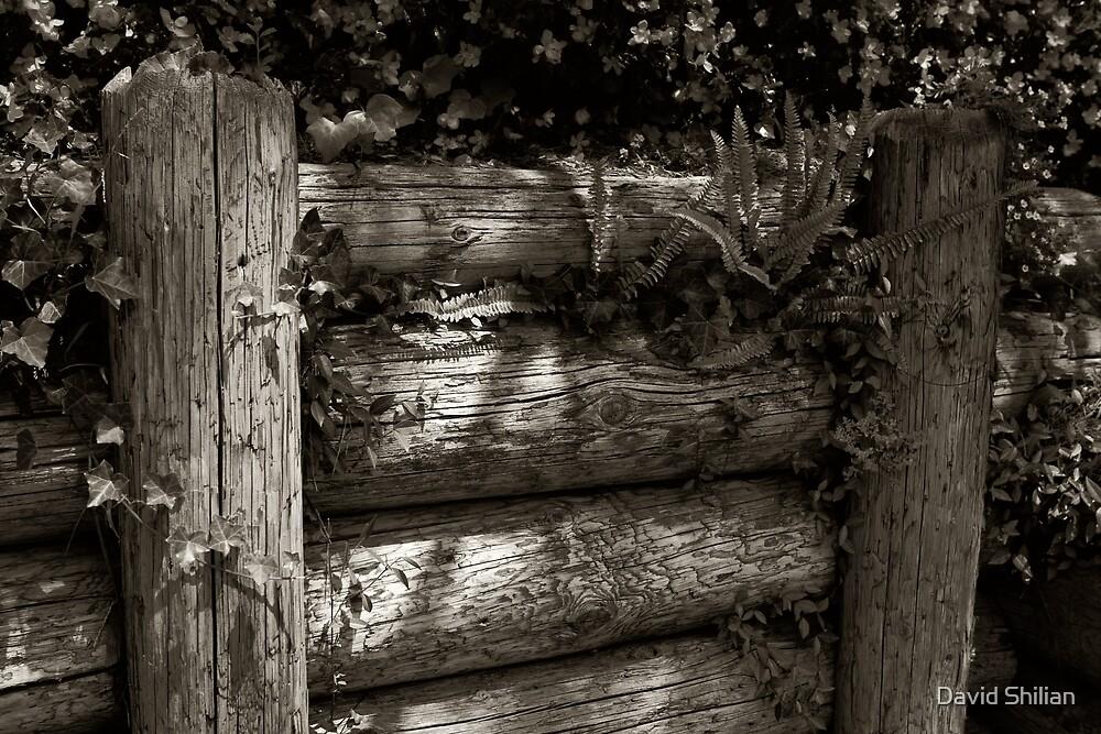 nature by David Shilian