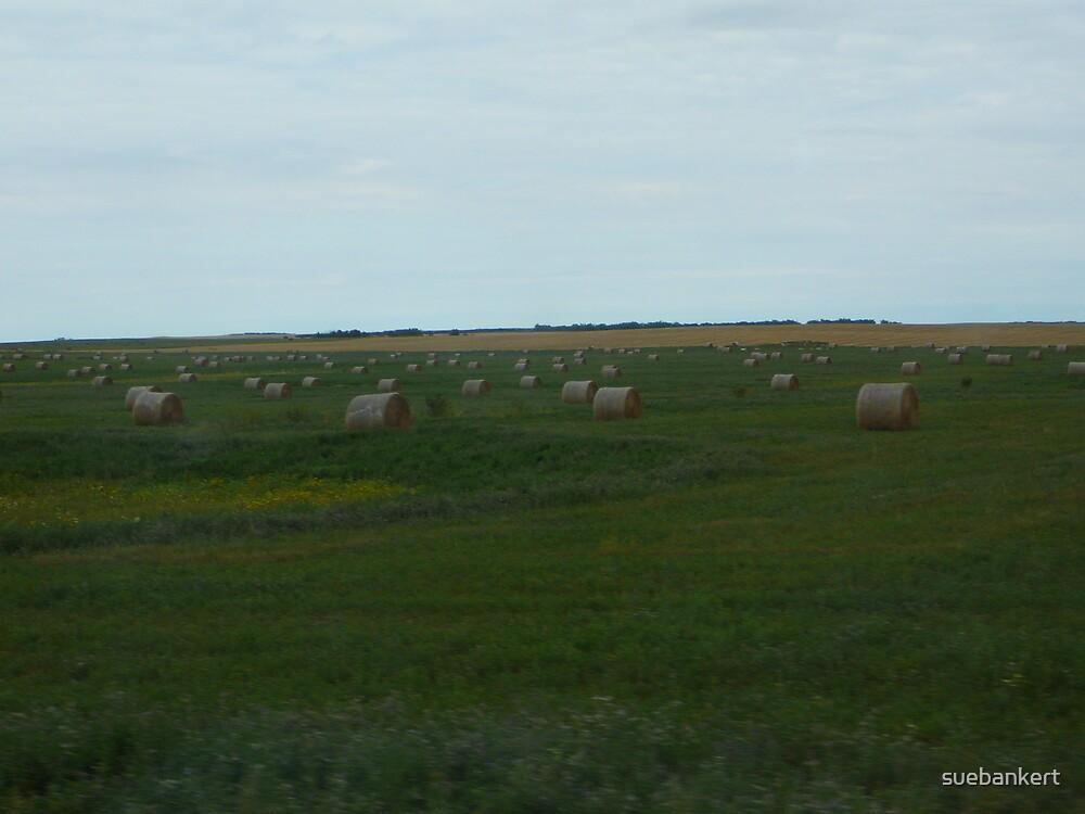 Prairies by suebankert