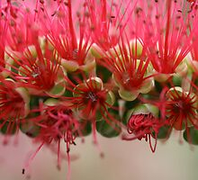 Bottle Brush by Justine Humphries